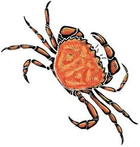 Bermuda - the Crab invasion large