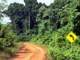 Image accompanying a memoir describing travels, adventures and misadventures in Guyana