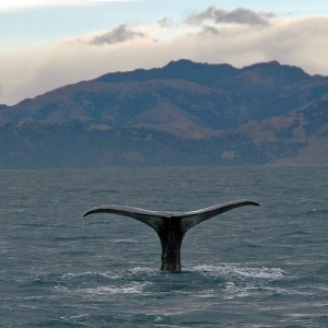 How the Whale Got Its Throat