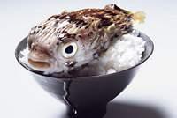 Japan puffer fish