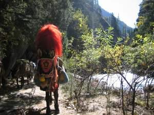 Nepal mule train large