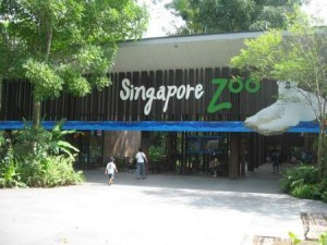 How the Polar Bears in Singapore Zoo Turned Green