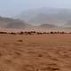 Algerian desert in Tonton story